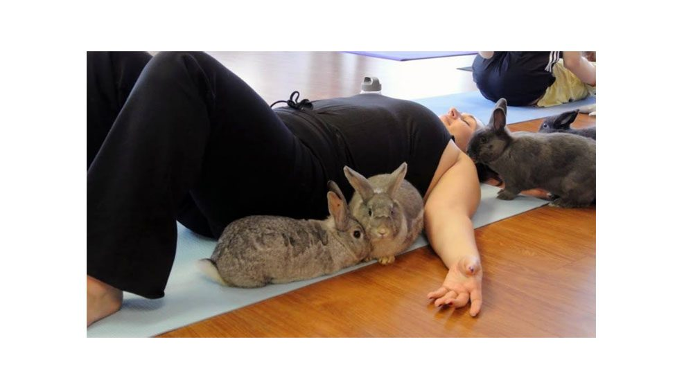 animal workouts Canada, bunny yoga in Richmond