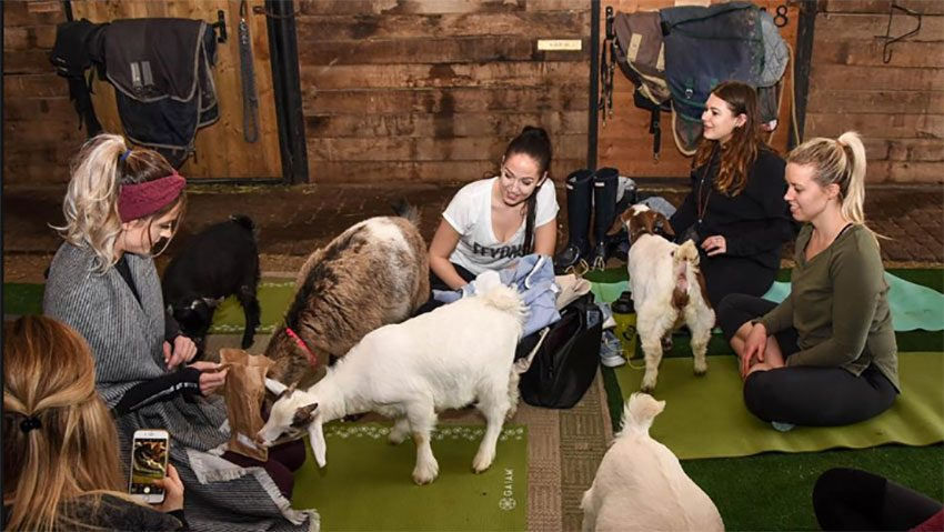 animal workouts canada goat yoga, women taking a class at Fox Den Yoga