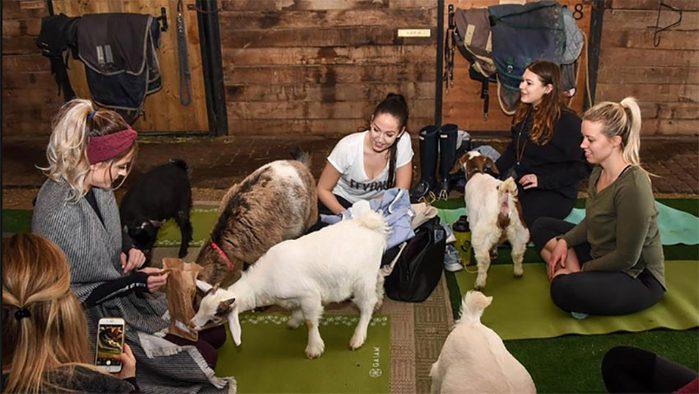 animal workouts canada goat yoga, women taking a class at Fox Den Yoga
