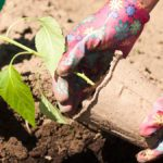 Garden Planning: Make Your Veggie Plot Meal-Worthy