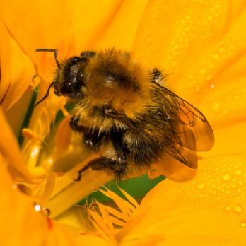 How Does Your Sustainable Bee Garden Grow?