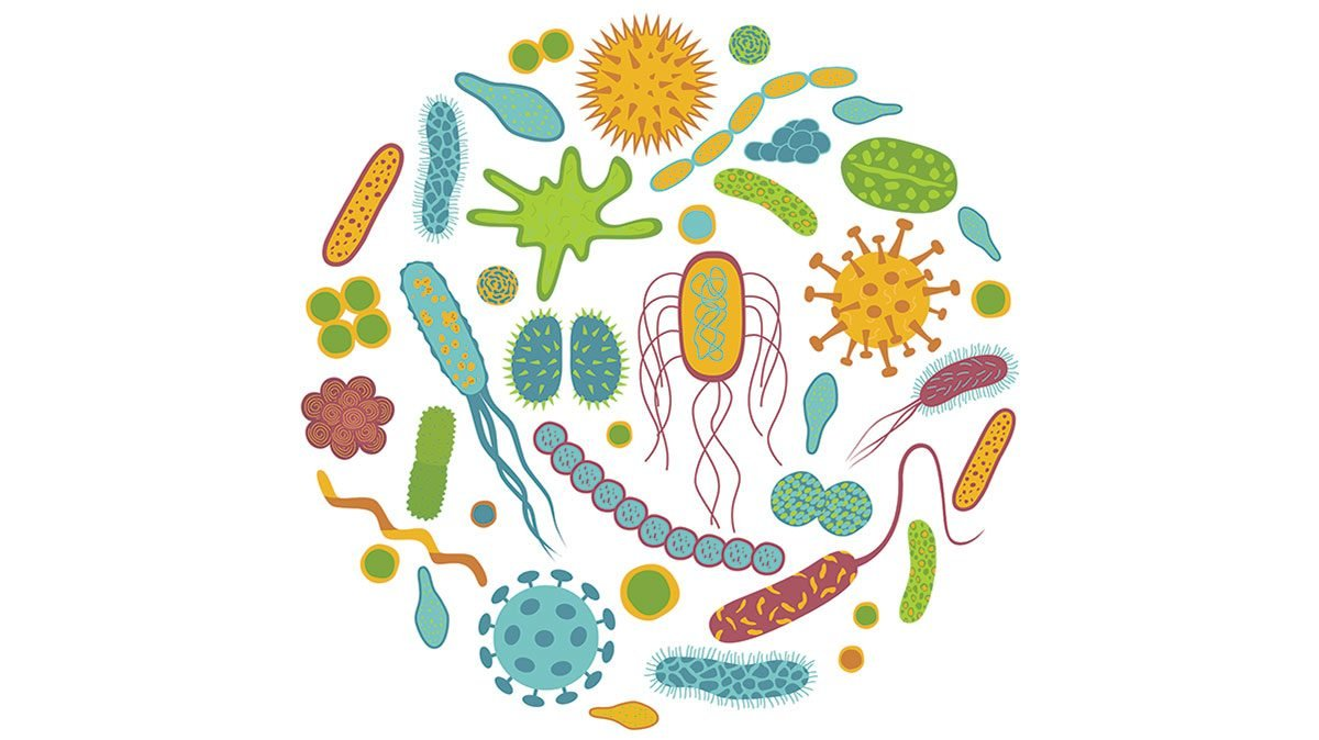 probiotics need to know, an illustration of good bacteria