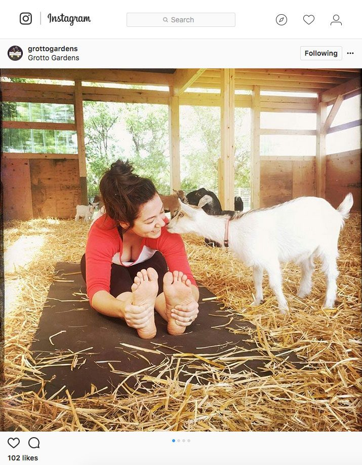 instagram yoga, goat yoga in Maple Creek Saskatchewan