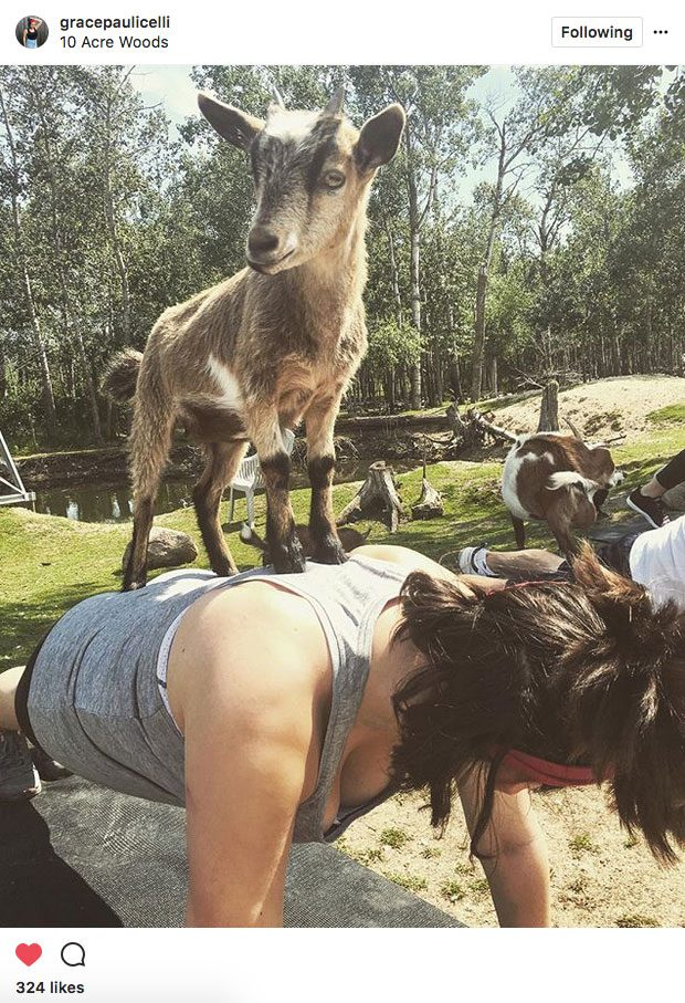 Instagram yoga, animal yoga at 10 Acres Woods