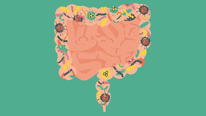leaky gut advice, illustration of digestive tract