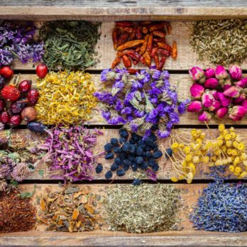 The Amazing Benefits of Herbs & What These Plants Can Do For Your Health