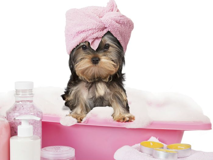 SelfcareSunday, doggy at the spa