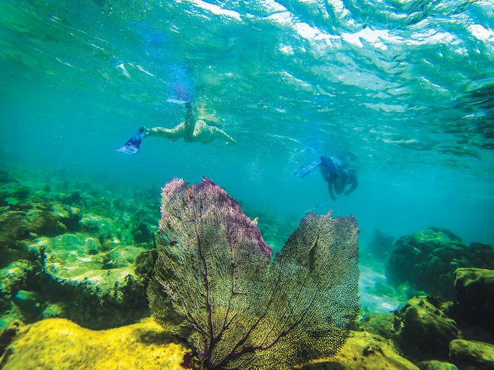 Belize Caye Caulker Barier Reef Snorkelling Armando Lulu, snorkeling underwater