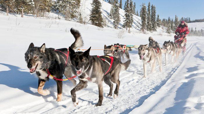 Canadian Winter Credit Government of Yukon/Fritz Mueller.jpg