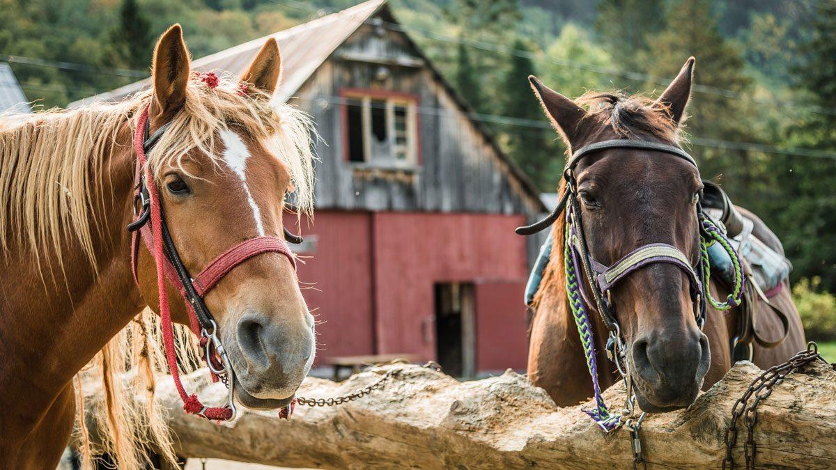 Lac Beauport Quebec horseback riding