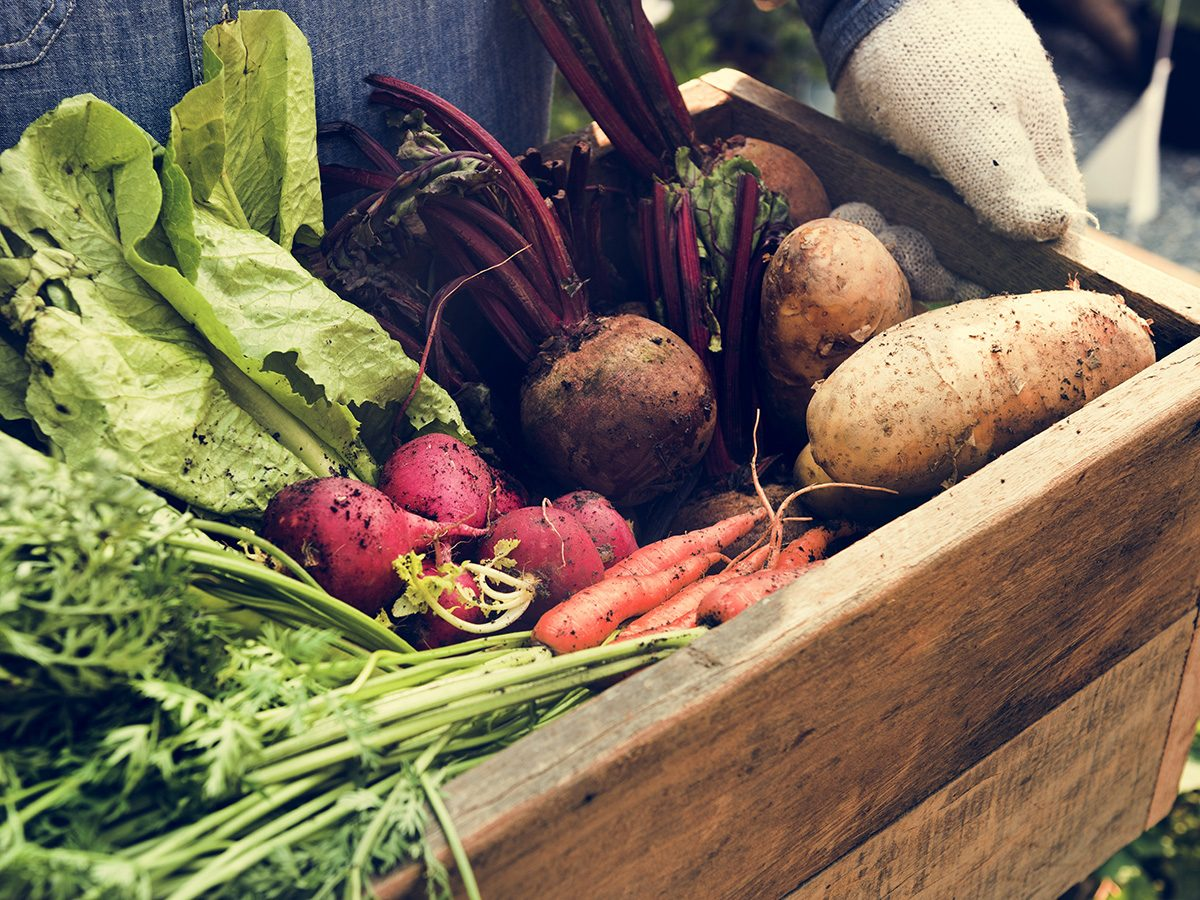Healthy eating, Wooden box of fresh organic vegetables held by a farmer. Hands and box only.