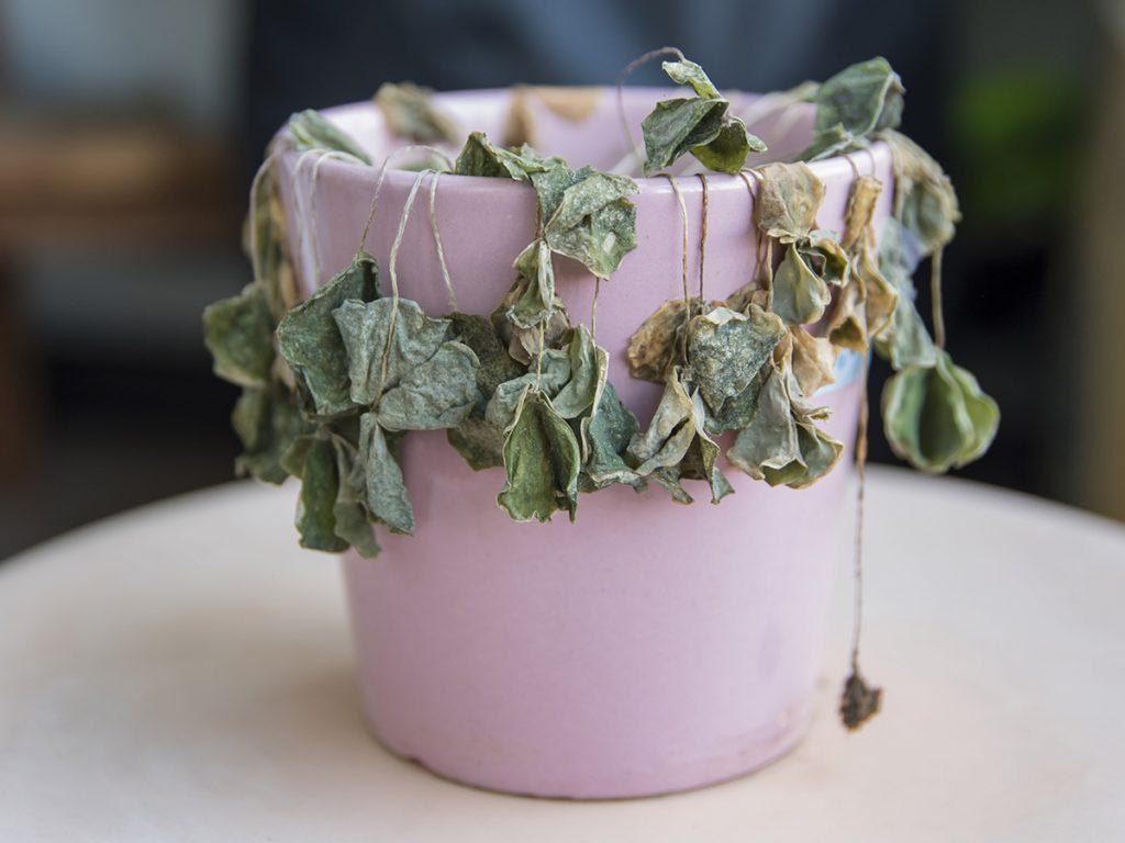 plant houseplant