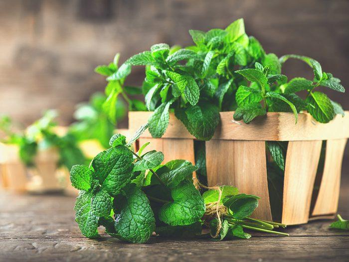 Superfoods, basket of mint