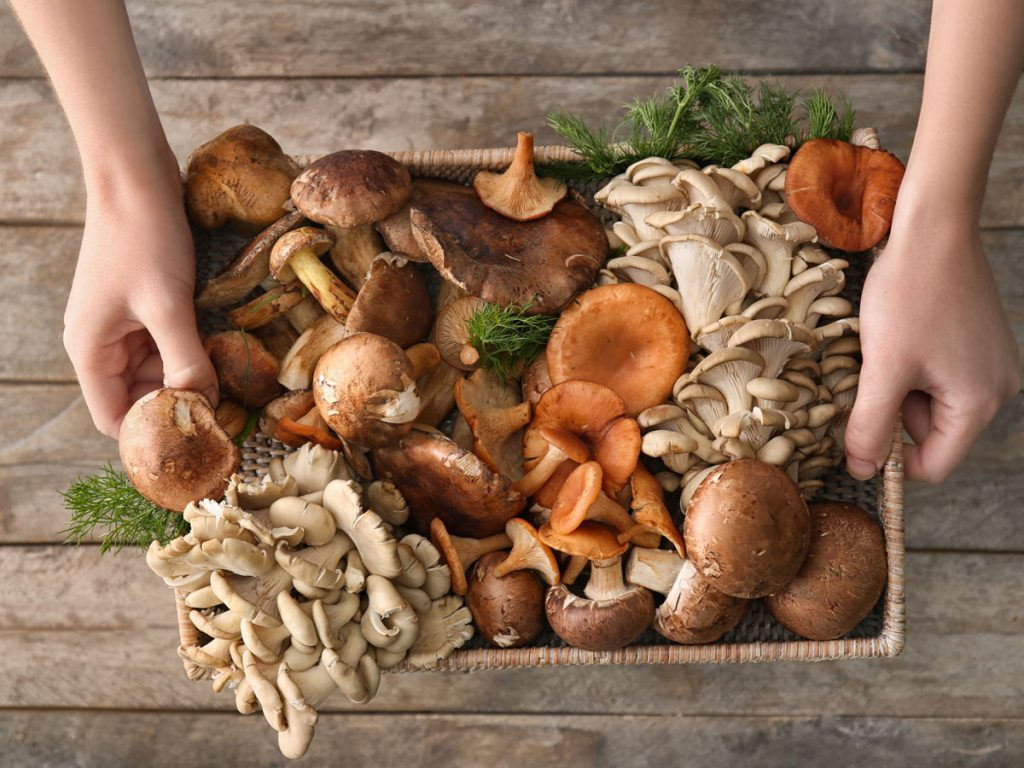 Mushroom Nutrition Facts and Benefits You Should Know | Best Health