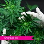 The Biological Science of Cannabis: How Marijuana Affects our Brains and Bodies