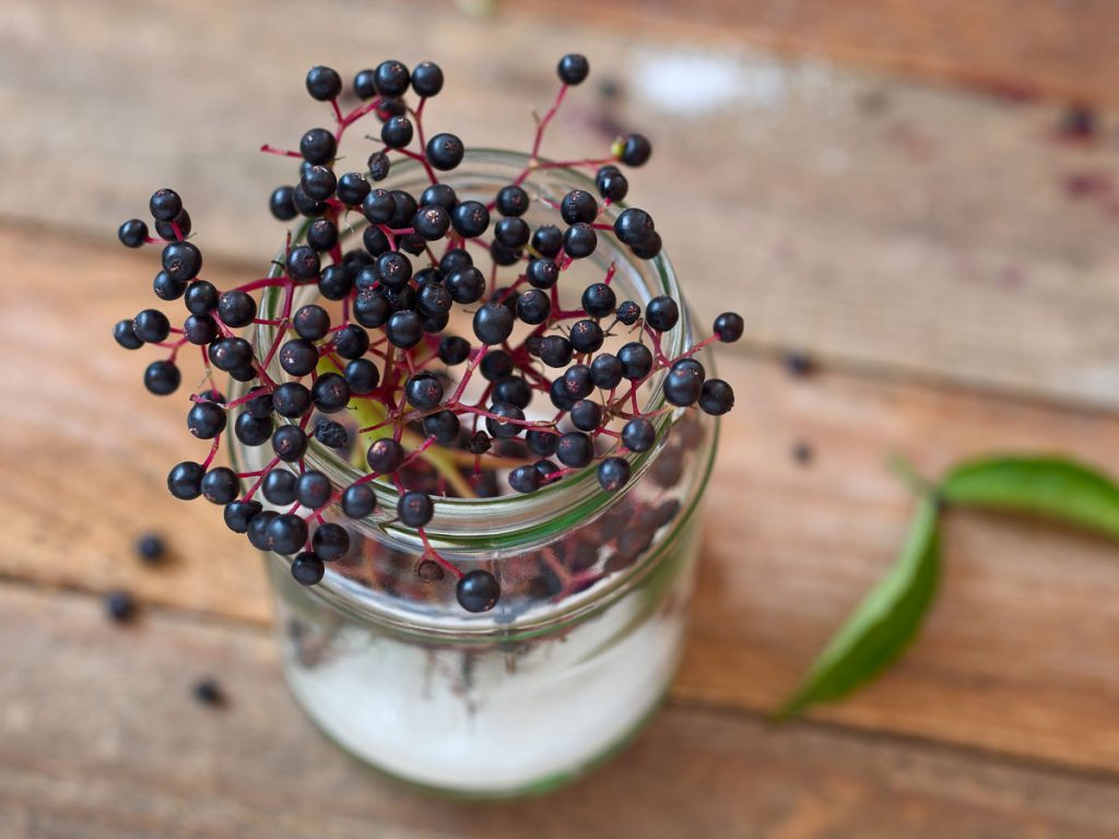 Elderberry recipes elderberries