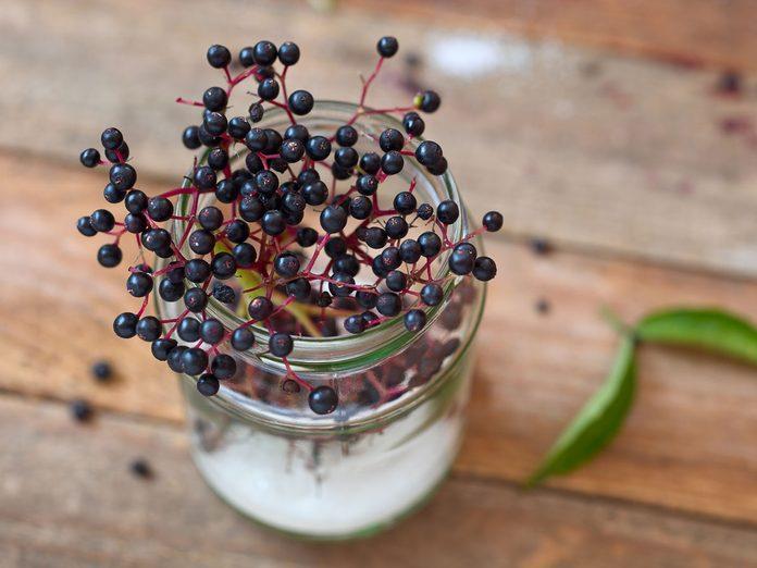Elderberry recipes elderberries