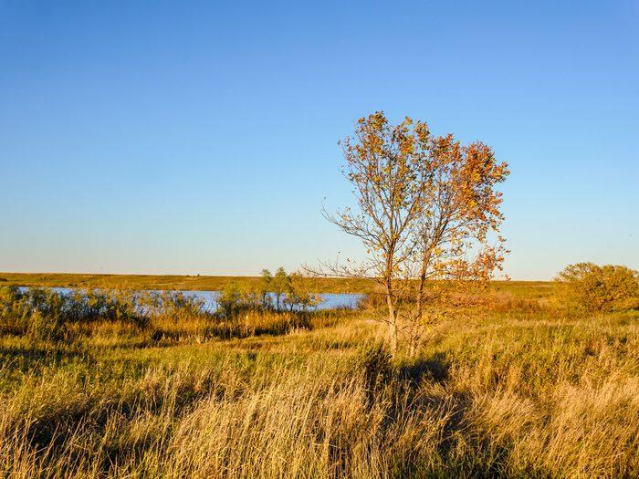 Saskatchewan field Canada