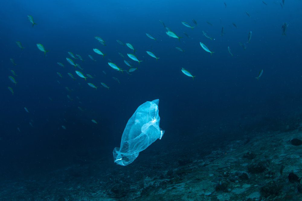 Plastic bag with school of fish, ocean pollution.