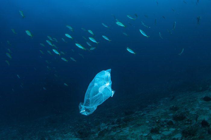 Plastic bag with school of fish, ocean pollution.