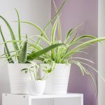The Best Air-Purifying Plants, According to NASA