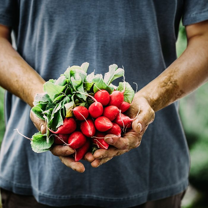 Farmers hands with freshly harvested vegetables.