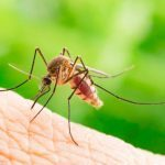 6 Signs You Could Have a Mosquito Bite Allergy