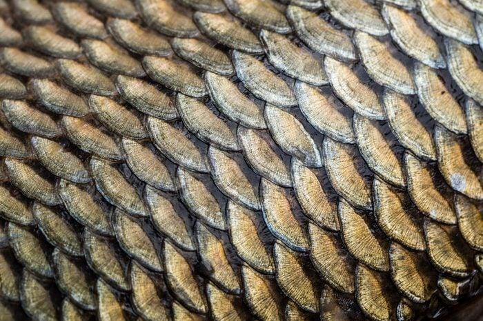 Carp fish scales grunge texture background