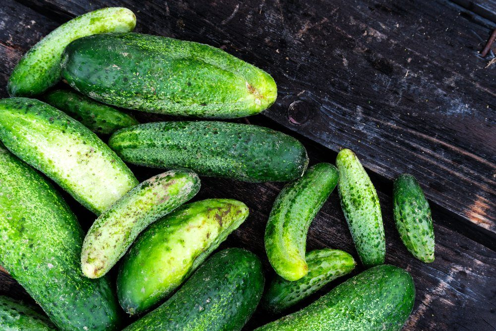 Freshly harvested pickling cucumbers on rustic dark wood from above. Space for text.