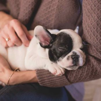10 Adorable Small Dog Breeds That Are Good for Your Health