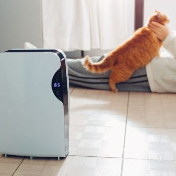 The Best Air Purifiers for Every Room In Your Home