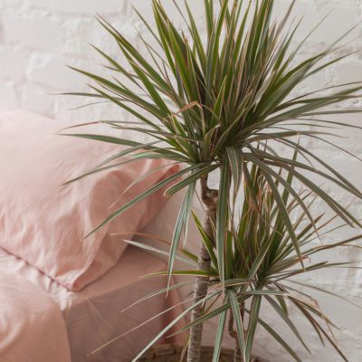 The Best Plants for Removing Air Pollution in Every Room of Your Home