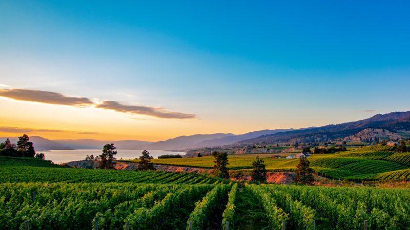 Osoyoos wineries