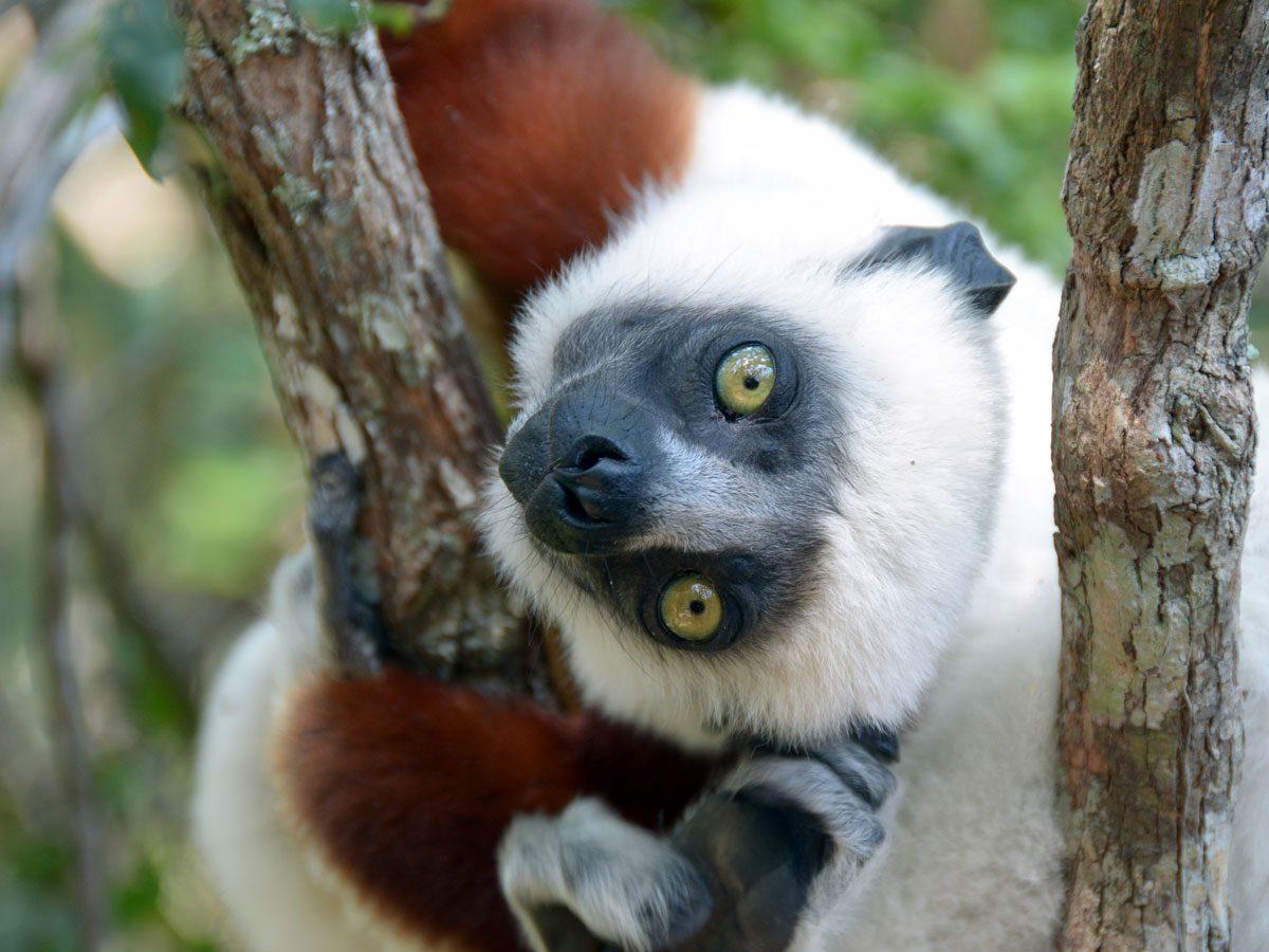 travel destinations for 2020 - Madagascar