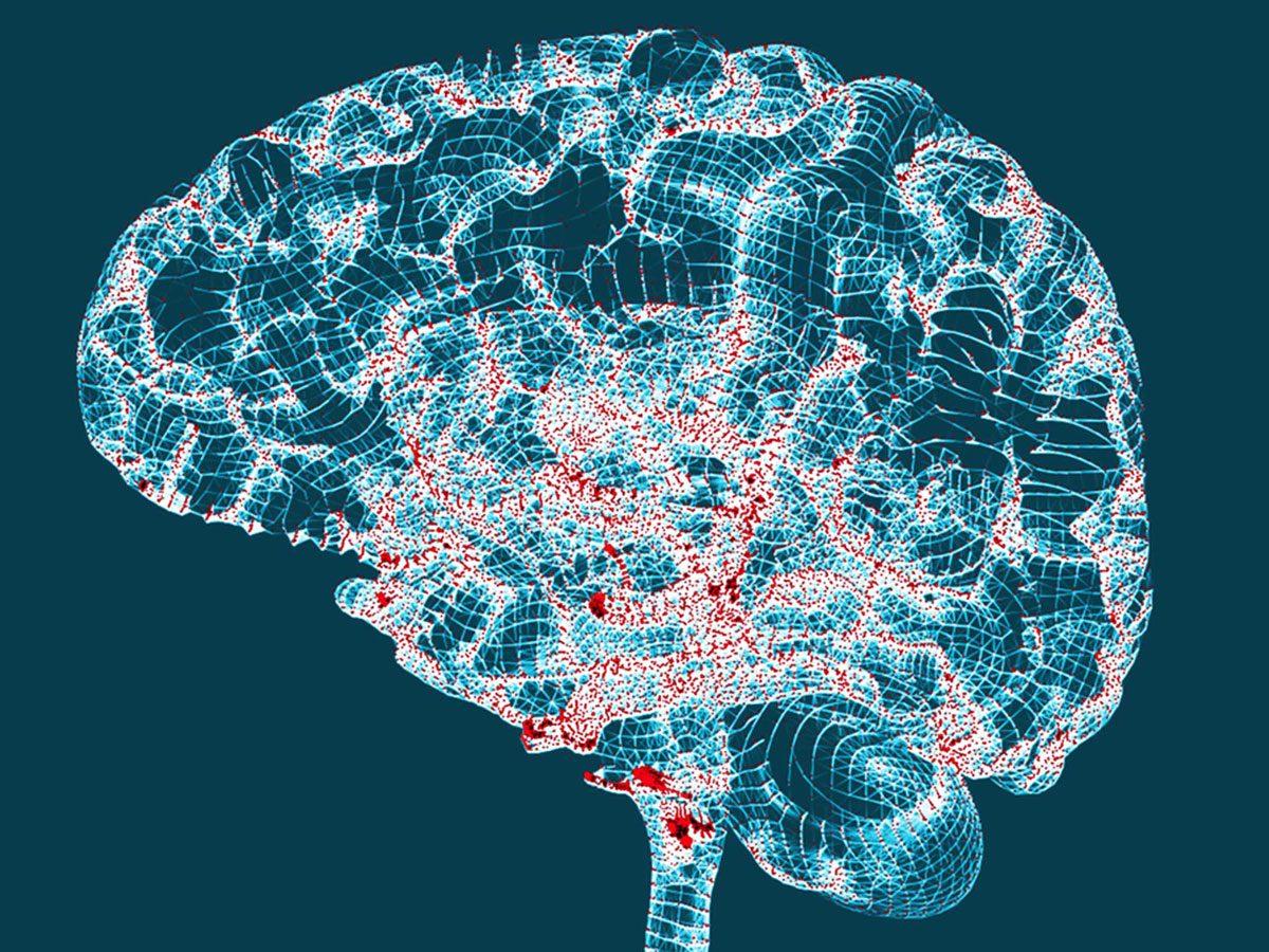 genetics - human brain