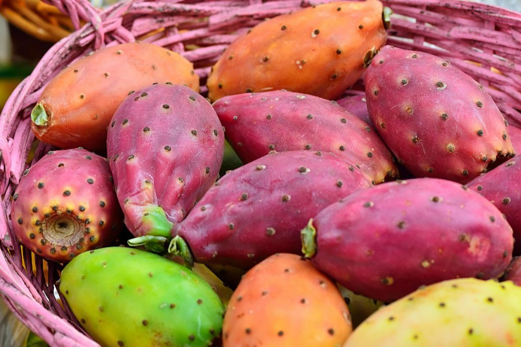 prickly pear cactus in a basket