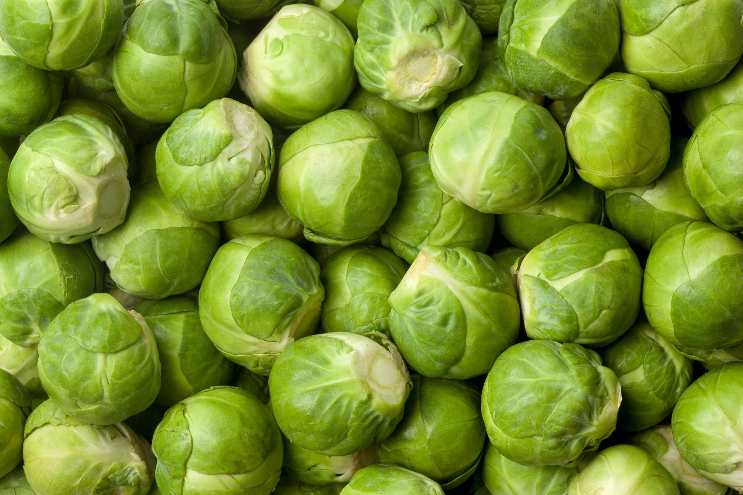 01_Sprouts_Surprising_Health_benefits_Gardening_