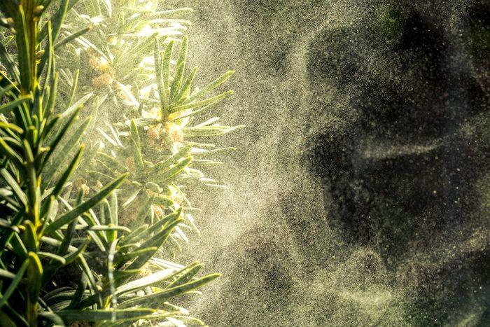 Cloud dust of tree
