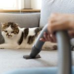 11 Cleaning Tips Every Dog or Cat Owner Should Know