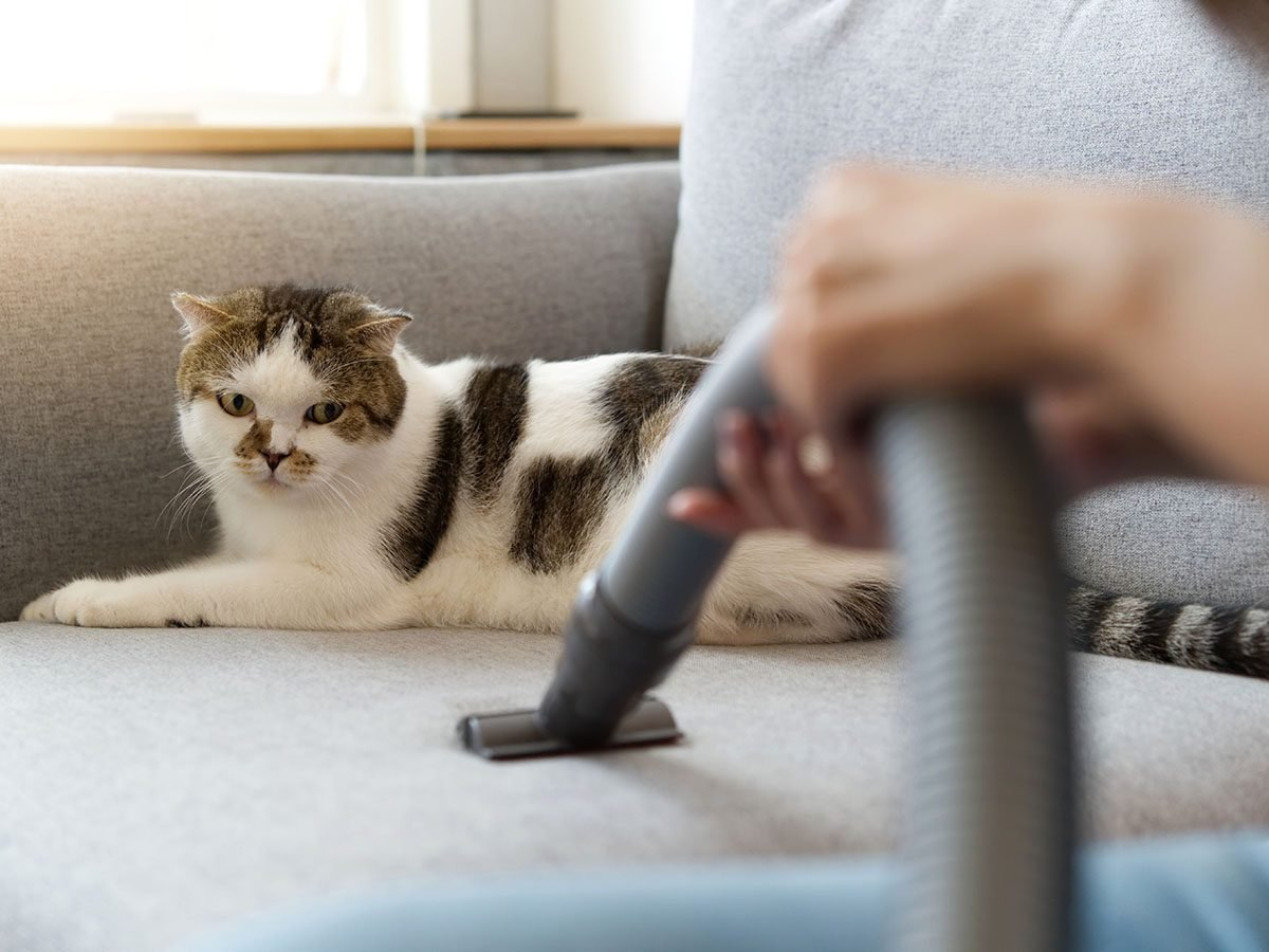 cat on sofa | vacuum