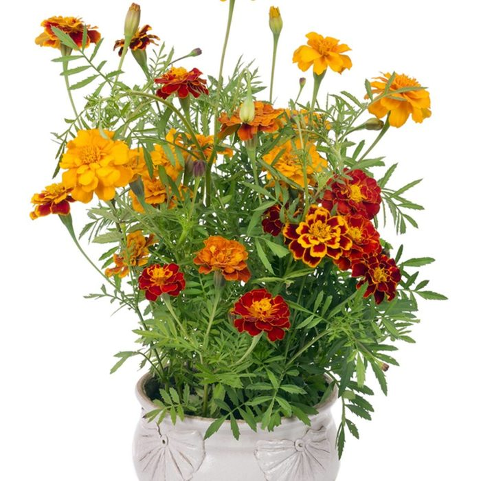 easy container plants