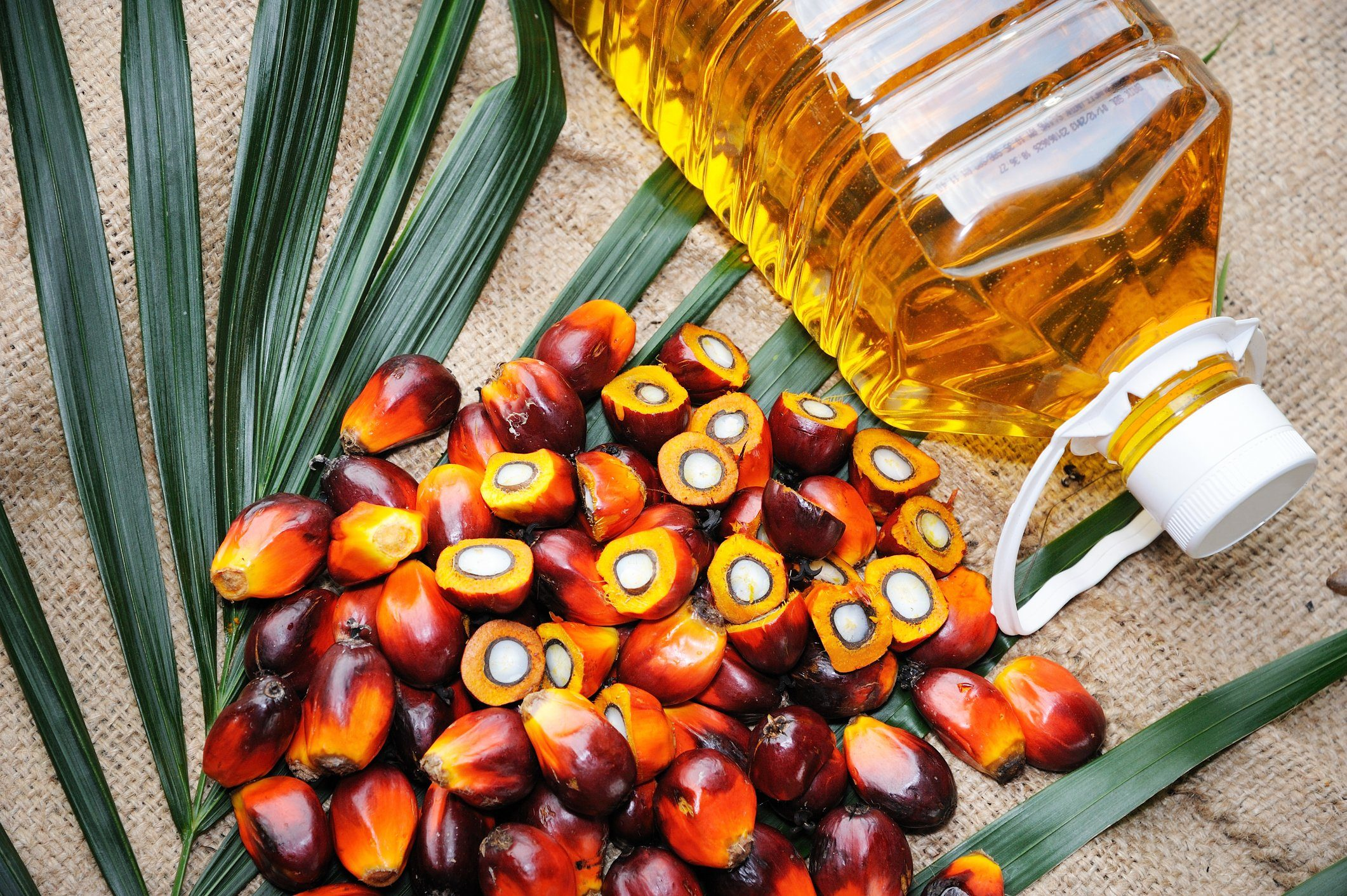 healthiest cooking oils | Fresh oil palm fruits