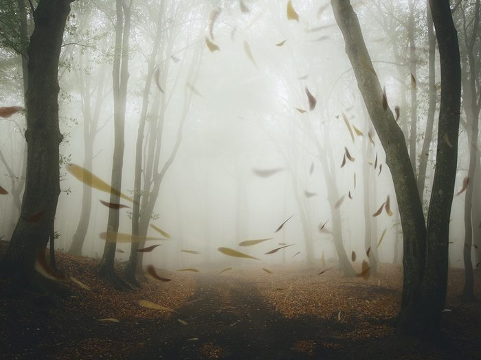 rumination obsessive thoughts | windy fall day | anxiety and depression