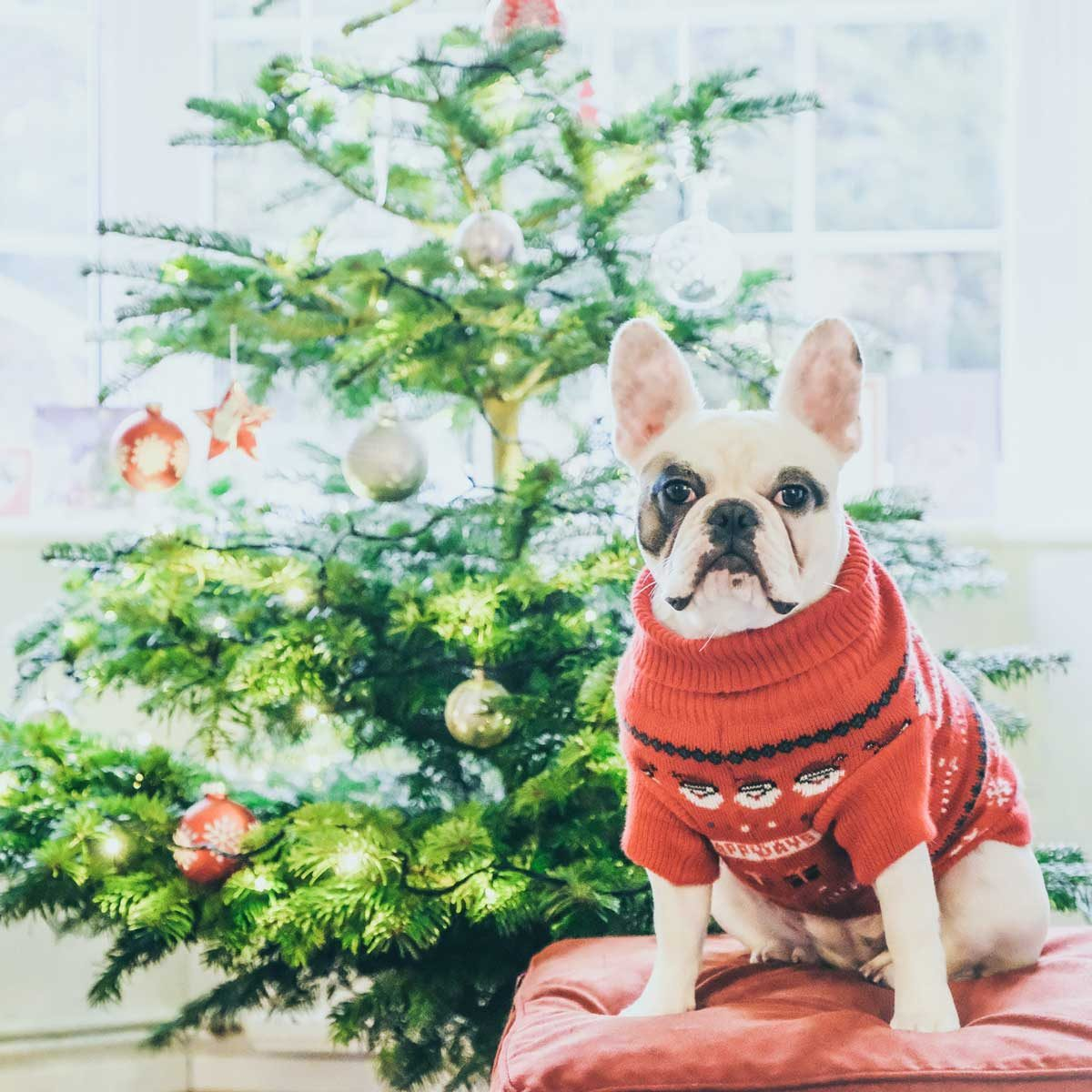 Dog by a Christmas tree