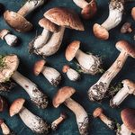What Are the Health Benefits of Mushrooms?