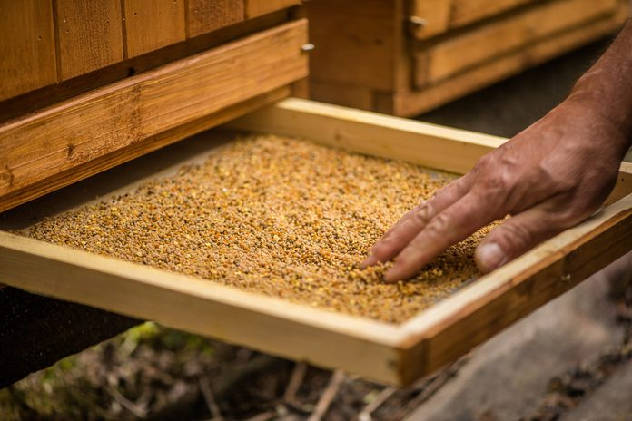 bee pollen benefits   Detail Of Bee Keeper Taking Out Pollen Propolis Tray Out Of Bee Hive