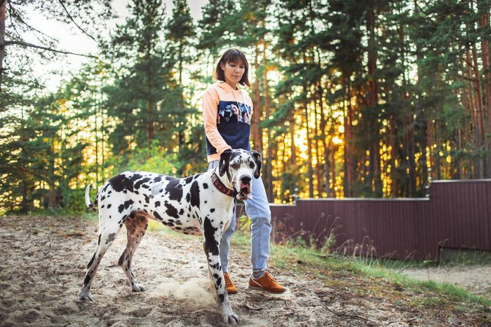 Woman And Great Dane Dog Walking And Looking Away In Forest
